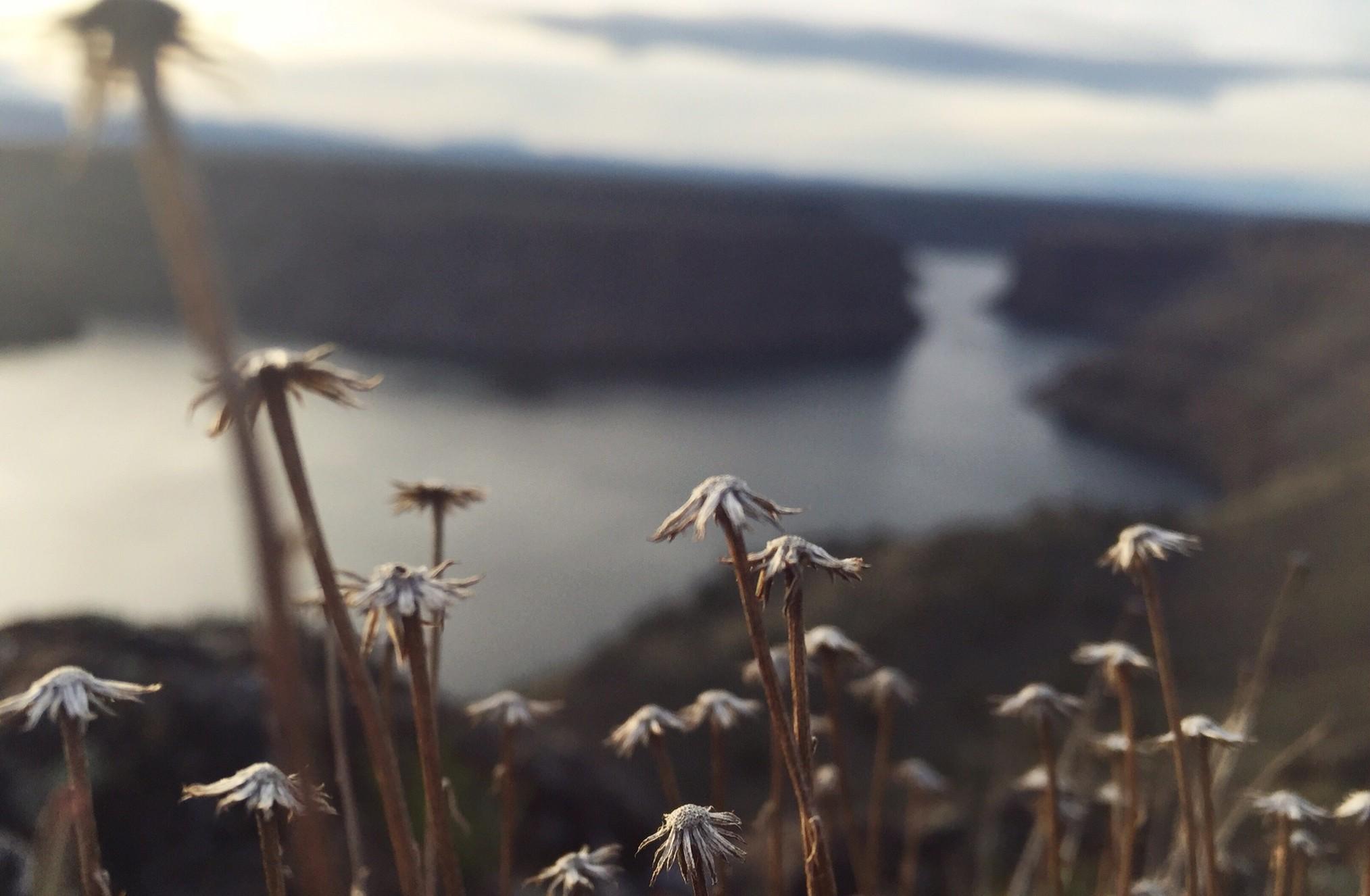 Exploring Oregon | Mallory Paige