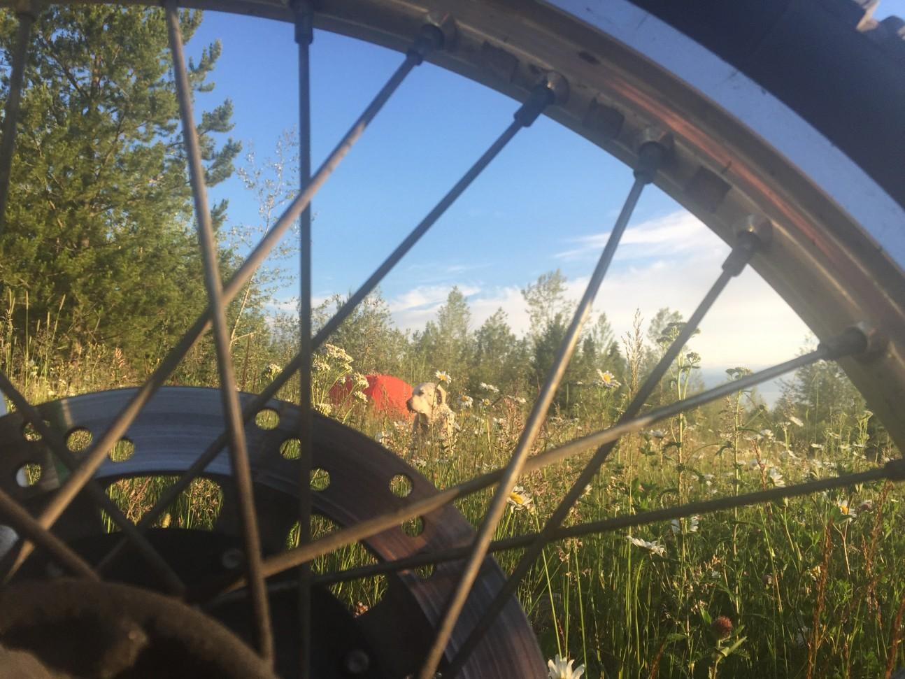 Moto Camp - Operation Moto Dog
