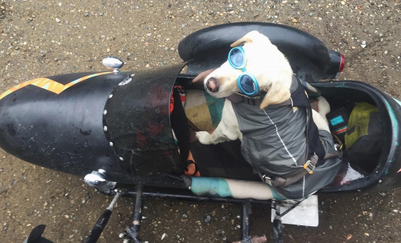 Baylor - Sidecar Pup
