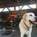 Baylor the Sidecar Dog - Operation Moto Dog