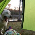 Baylor the Sidecar Dog | Sleepy Camping Dog | Operation Moto Dog Day 142