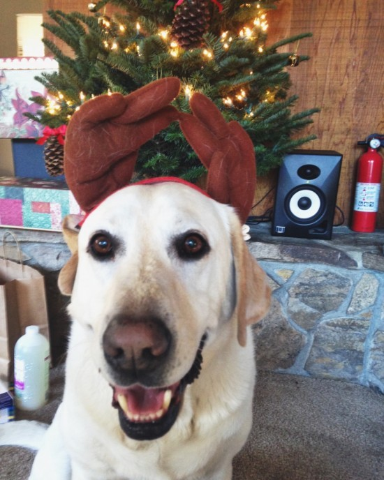 Merry Christmas from Baylor the Dog