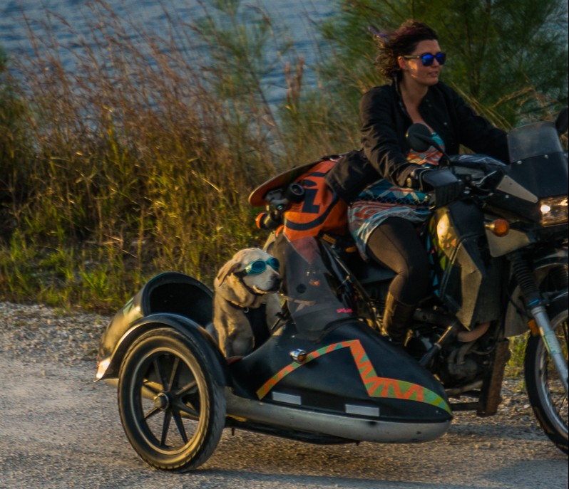 Favorite Gear for a Motorcycle Sidecar Dog – Mallory Paige