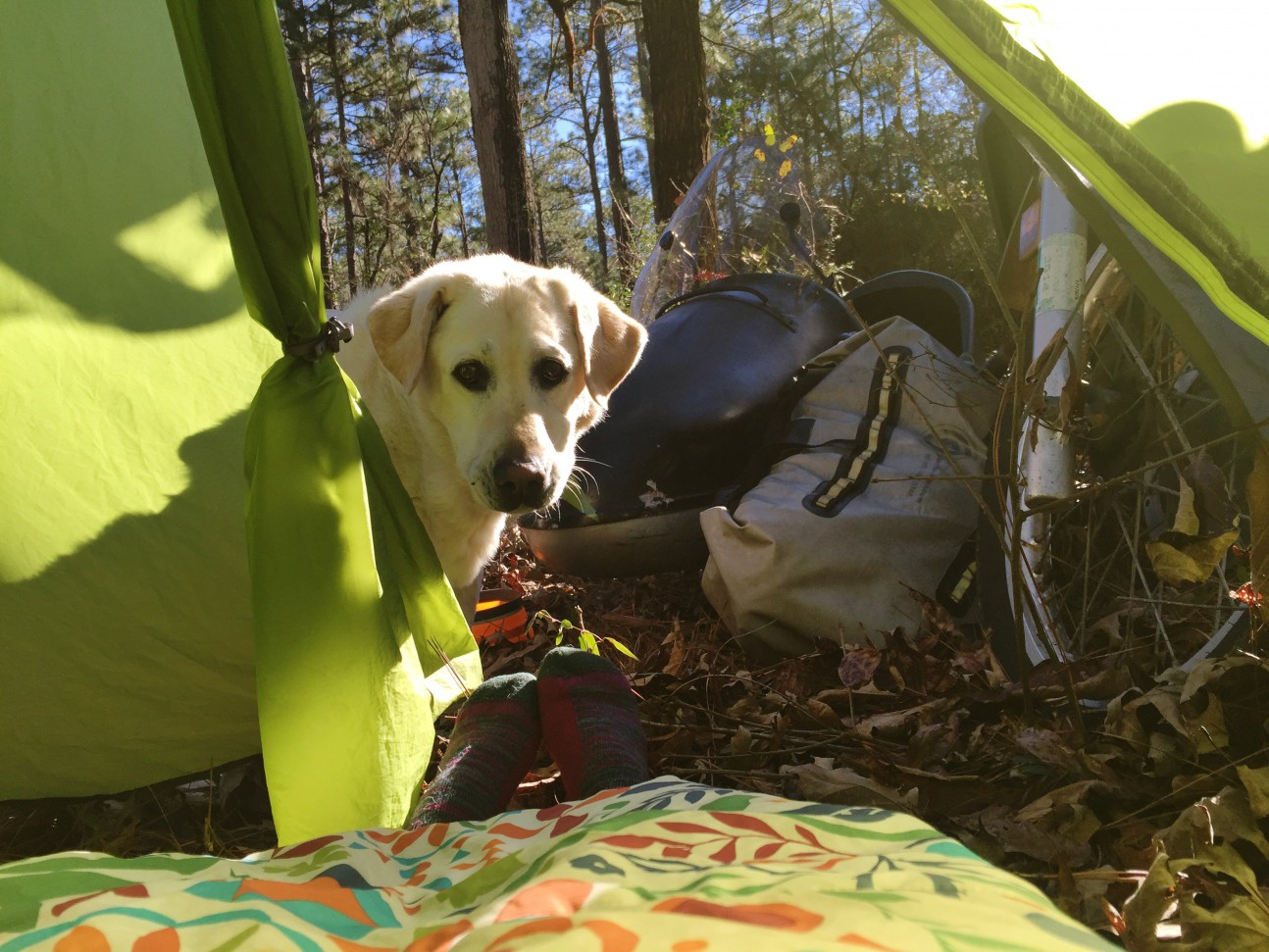 Baylor the Sidecar Dog Goes Camping