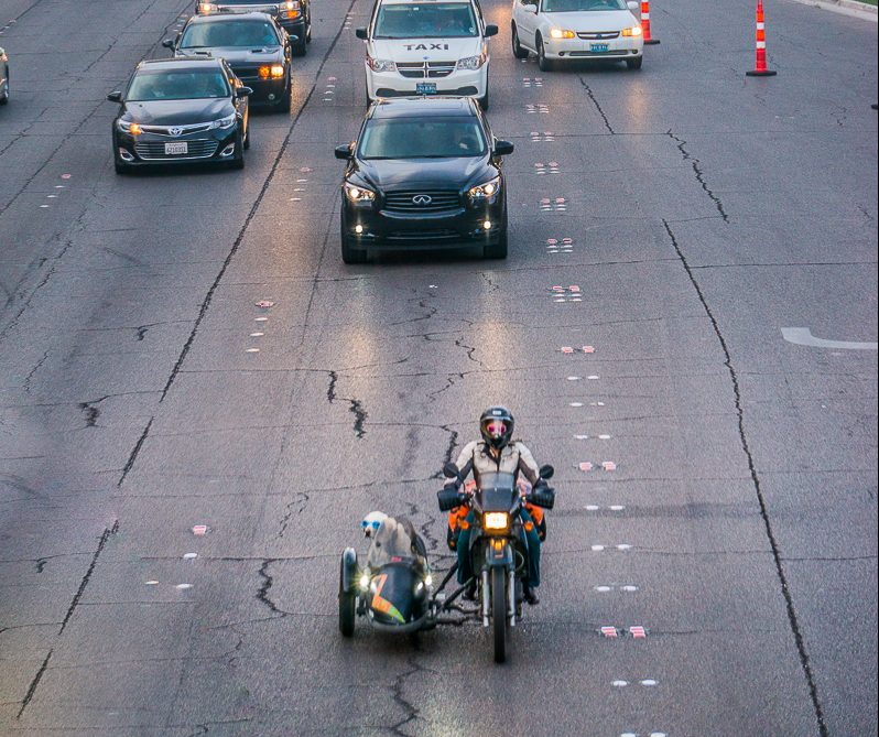 Sidecar Dog in Las Vegas | Operation Moto Dog Day 265