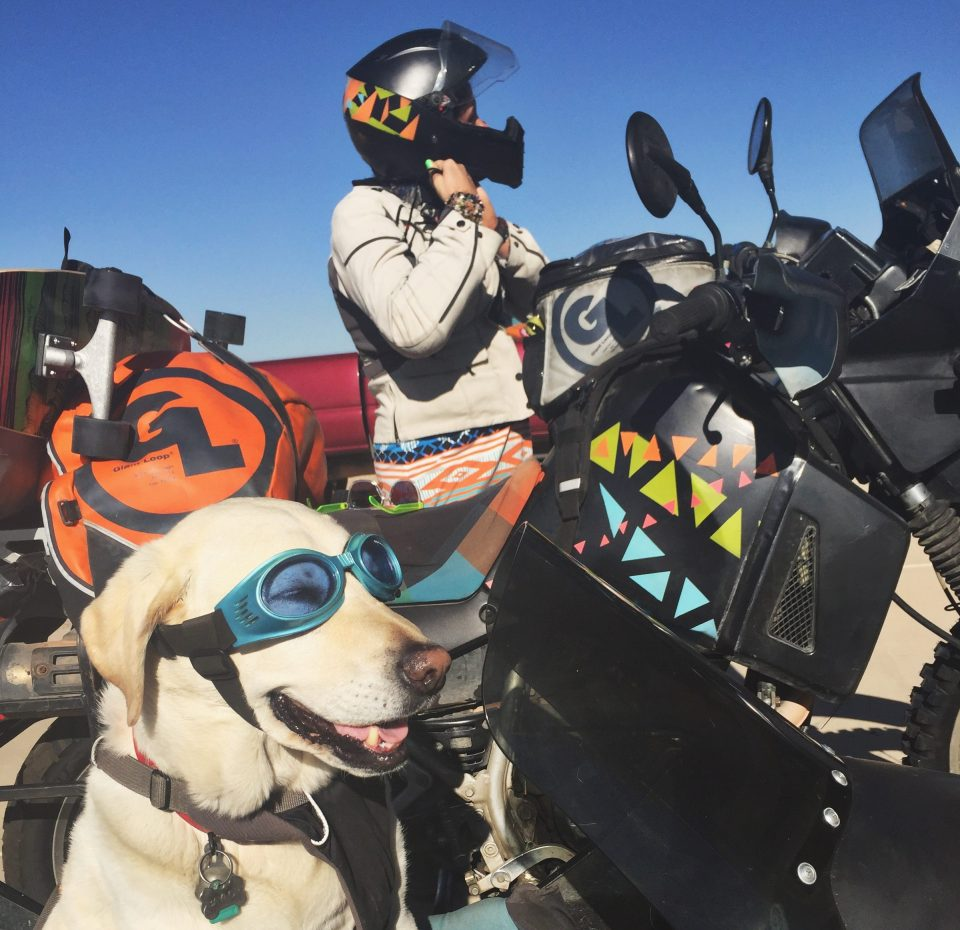 Baylor the Sidecar Dog | Operation Moto Dog Day 381