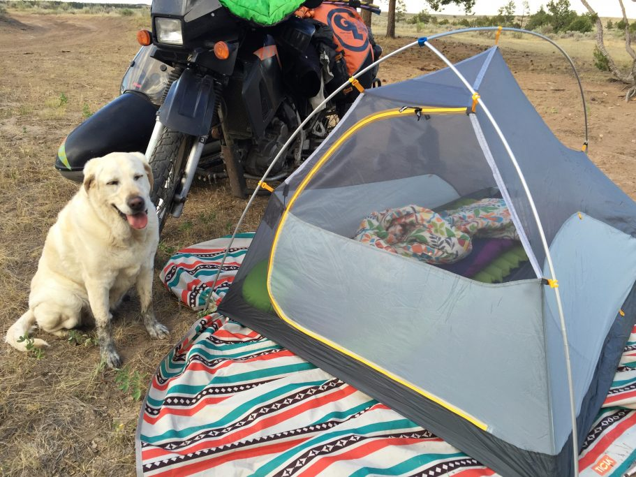 Baylor the Dog Gets Dirty Camping | Operation Moto Dog Day 389