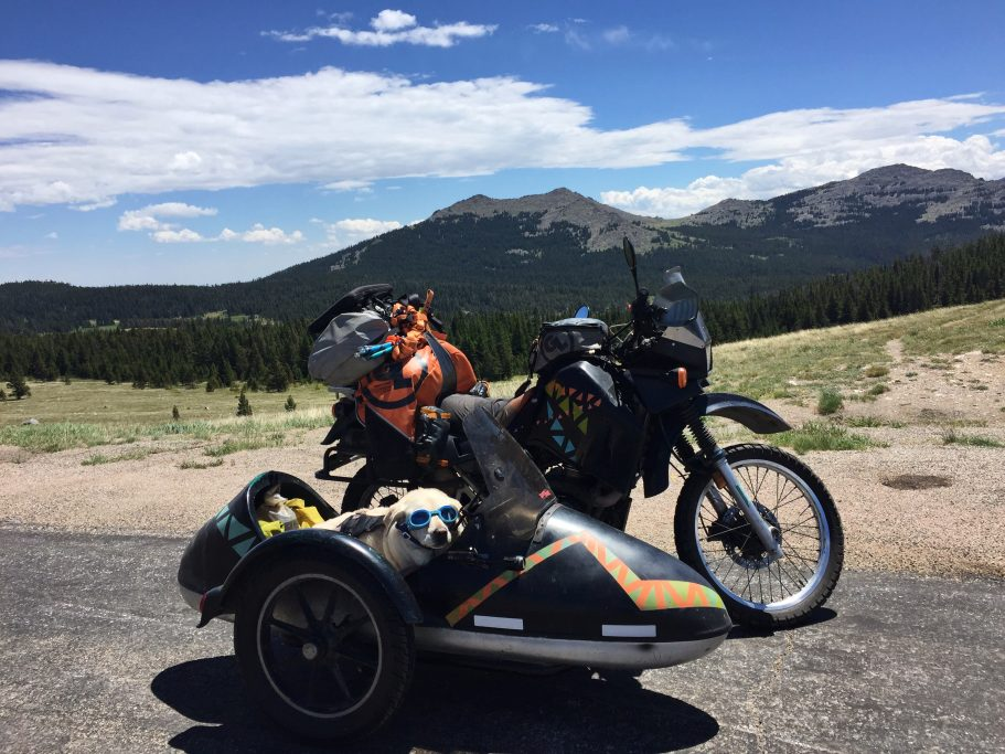 Baylor the Sidecar Dog in Big Horn National Forest