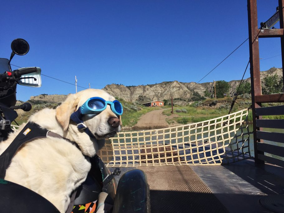 Baylor the Motorcylce Dog in the Upper Missouri Breaks