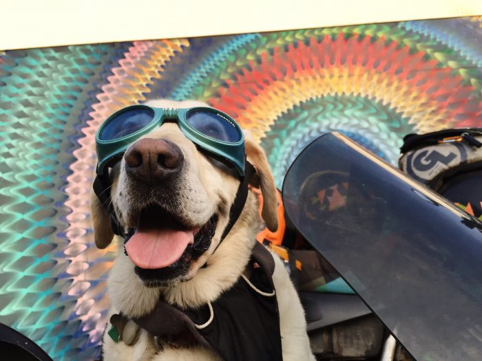 Baylor the Motorcyle Dog Loves Doggy Goggles