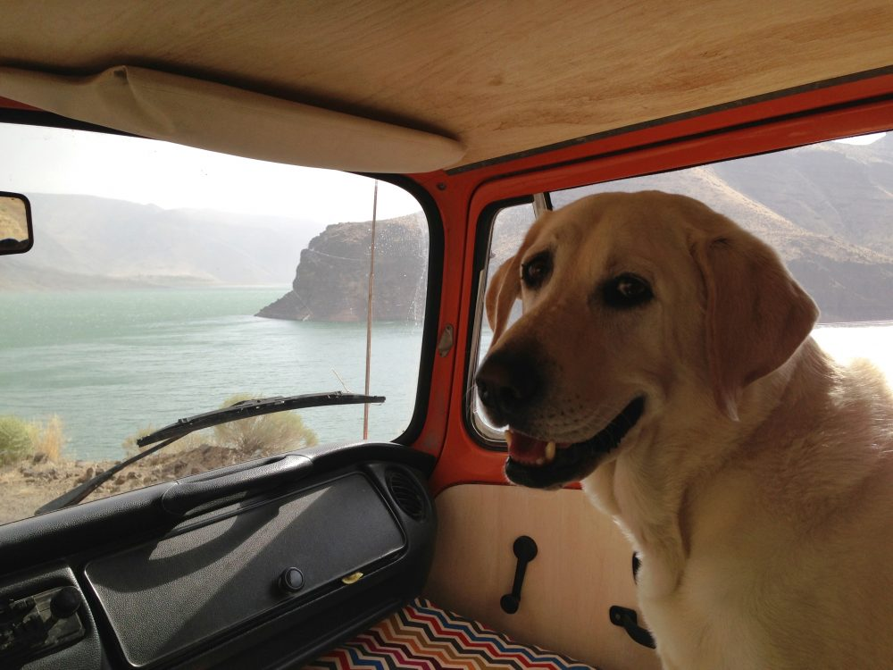 Baylor the Dog Lives the Van Life