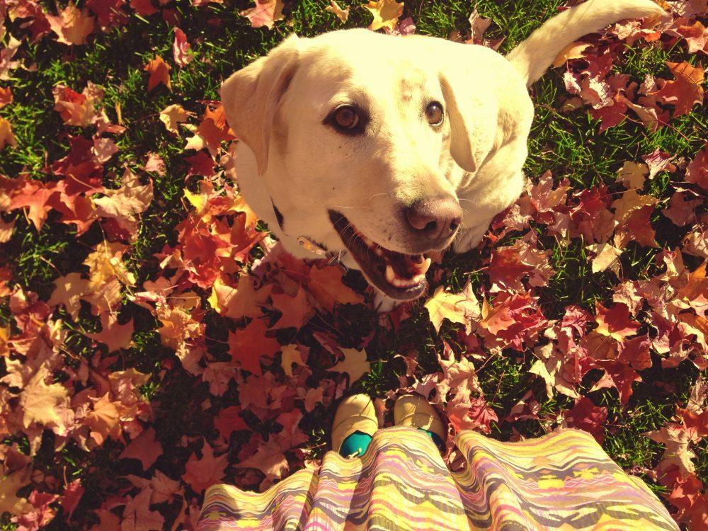 Baylor the Dog