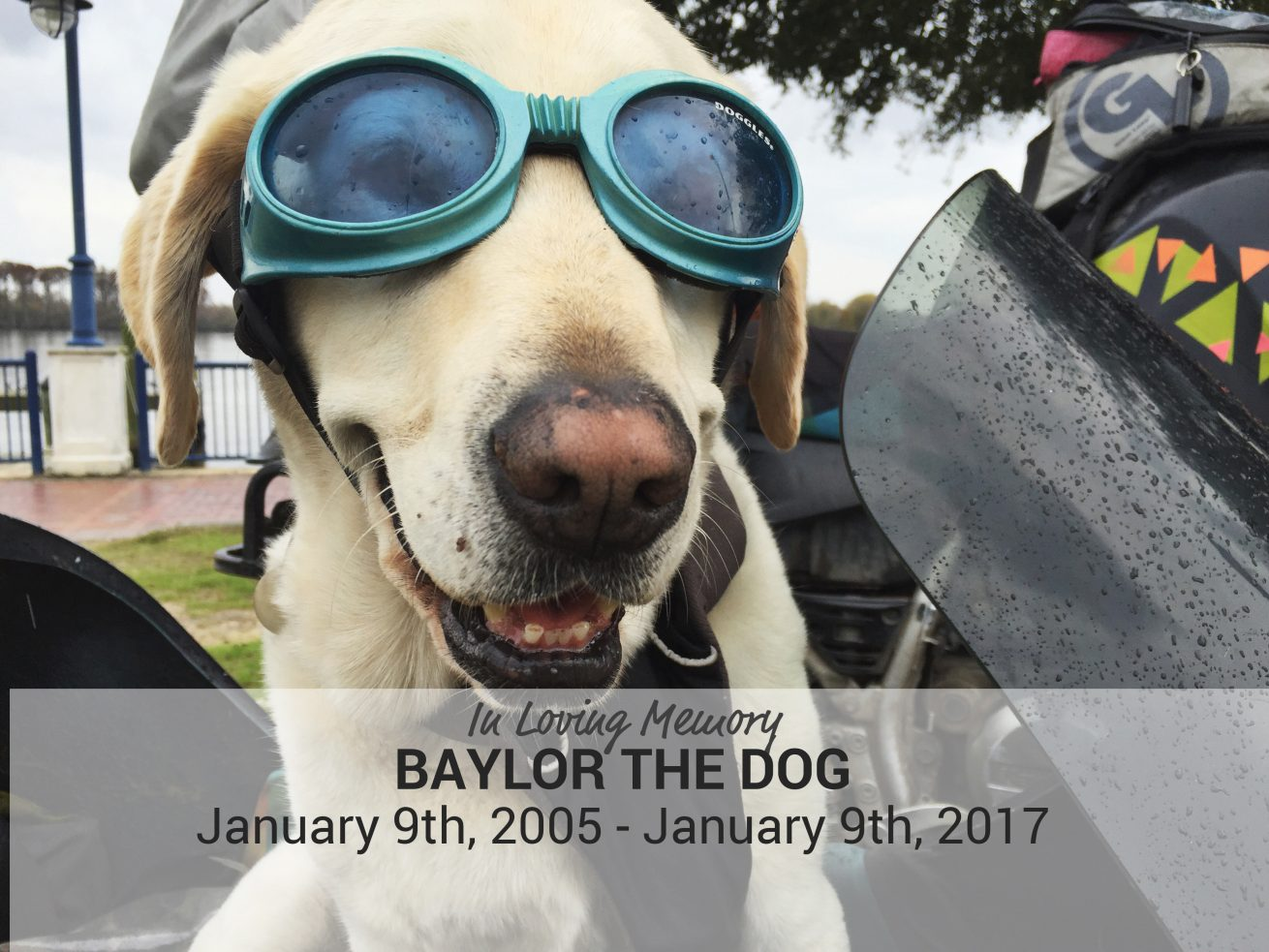In Loving Memory of Baylor the Dog