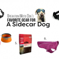 Operation Moto Dog's Favorite Gear for the Sidecar Dog