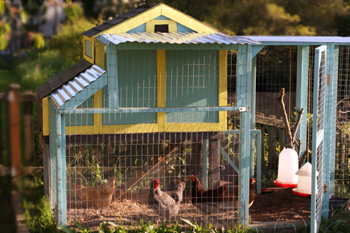 Mallory's Seattle Backyard Chicken Coop